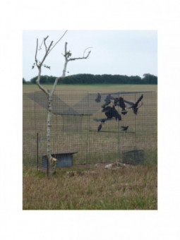 BOTTES GATEWAY Pheasant...